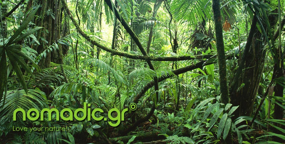 nomadic-jungle-slide